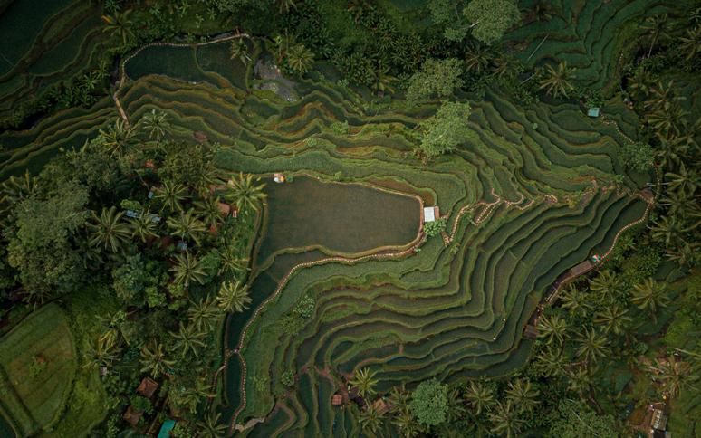 bali-rice-fields-google-maps-sky-compass-media
